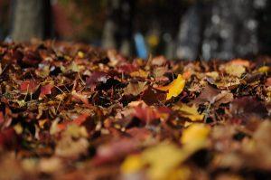 Ponti e week-end d'autunno