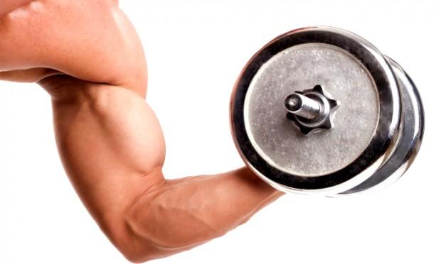 Muscoli ed energia