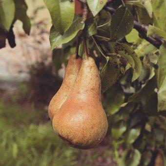 Dimagrire con una pera al giorno