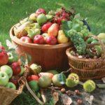 La dieta autunnale - Frutta