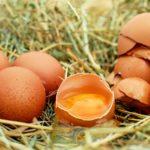 Ecco cosa succede al tuo corpo se mangi le uova