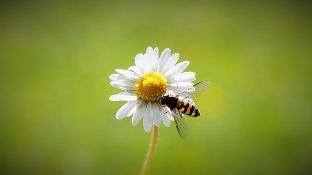 Salviamoci la pelle da api, vespe e calabroni