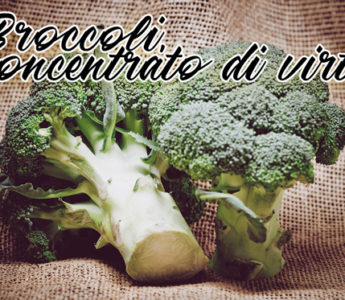 Broccoli, concentrato di virtù
